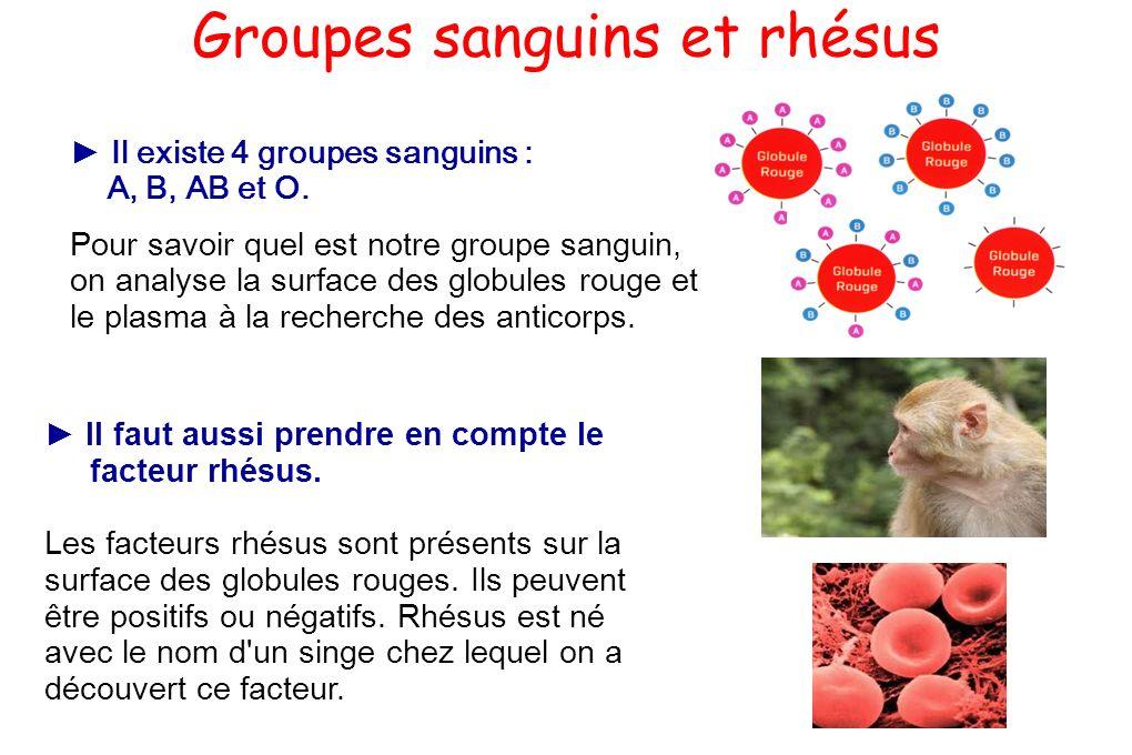 Groupes sanguins et rhésus