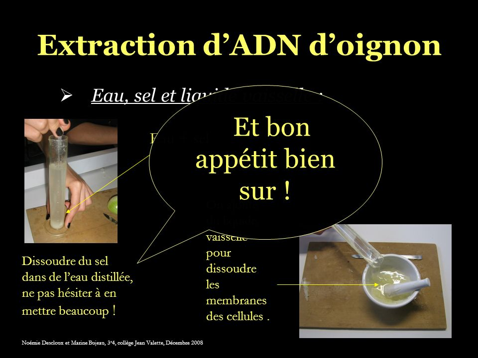 Extraction d'ADN d'oignon
