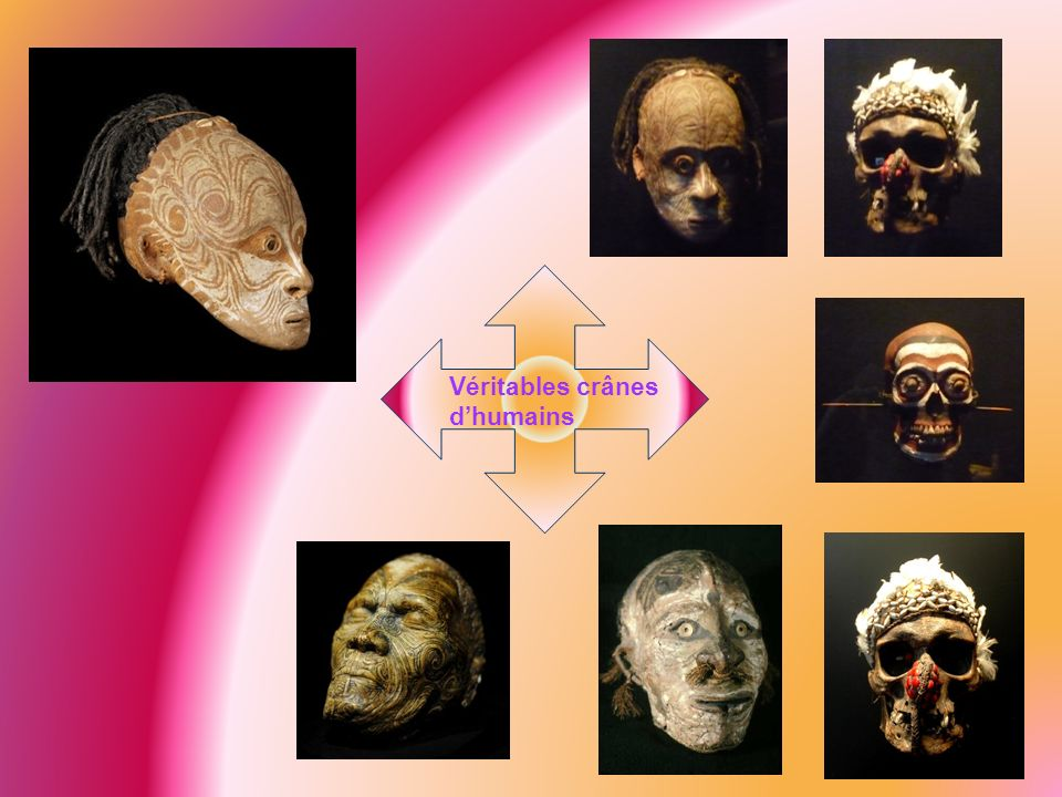 Véritables crânes d'humains