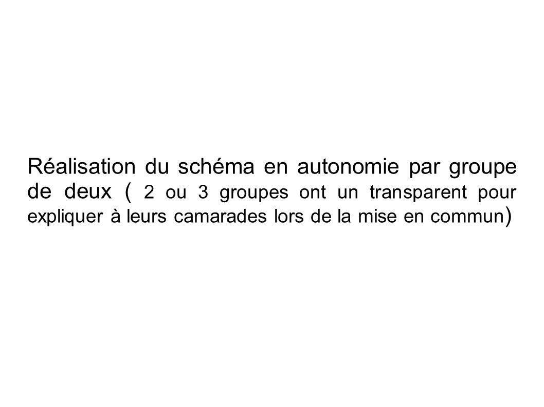 Réalisation du schéma en autonomie par groupe de deux ( 2 ou 3 groupes ont un transparent pour expliquer à leurs camarades lors de la mise en commun)