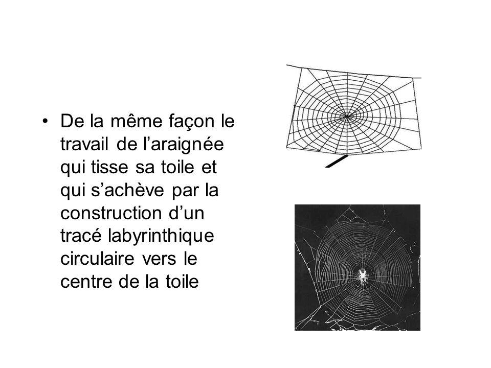 De la même façon le travail de l'araignée qui tisse sa toile et qui s'achève par la construction d'un tracé labyrinthique circulaire vers le centre de la toile