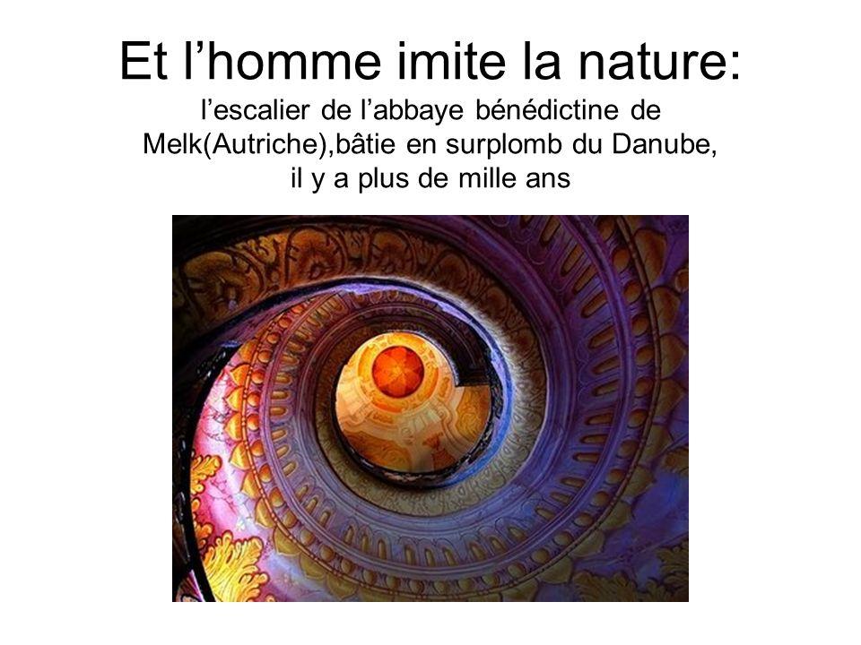 Et l'homme imite la nature: l'escalier de l'abbaye bénédictine de Melk(Autriche),bâtie en surplomb du Danube, il y a plus de mille ans