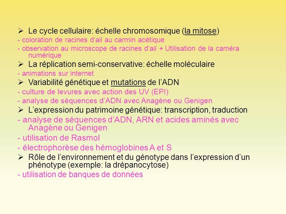 - utilisation de Rasmol - électrophorèse des hémoglobines A et S