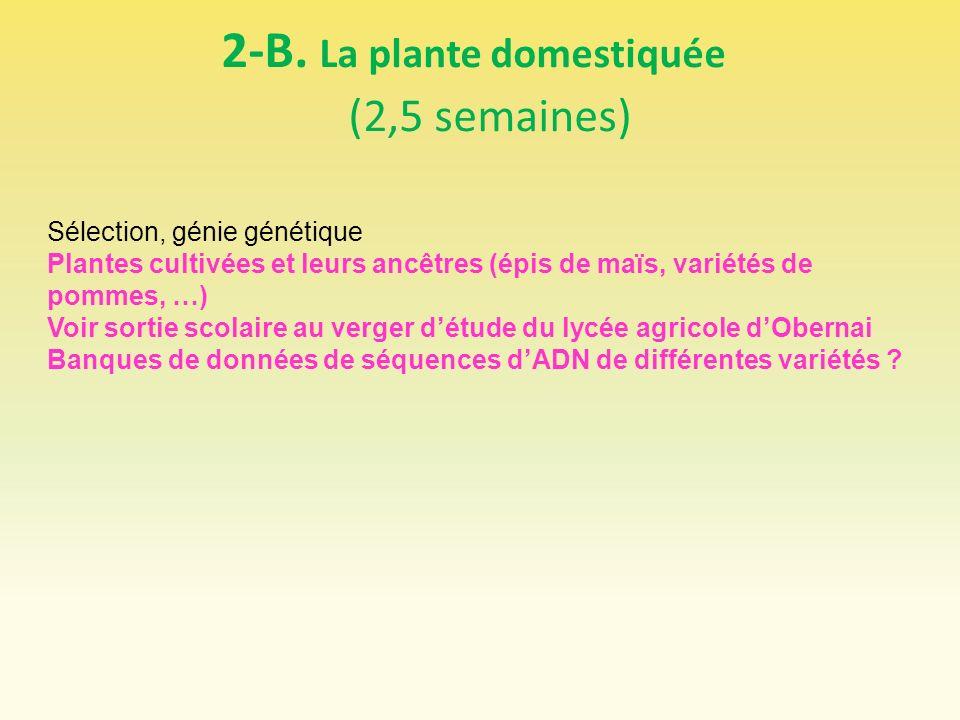 2-B. La plante domestiquée (2,5 semaines)