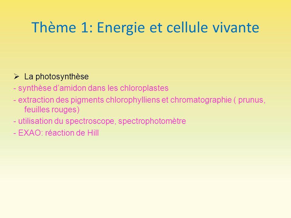Thème 1: Energie et cellule vivante