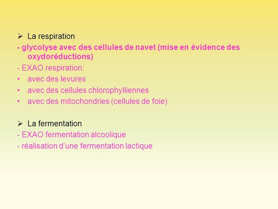 La respiration - glycolyse avec des cellules de navet (mise en évidence des oxydoréductions) - EXAO respiration: