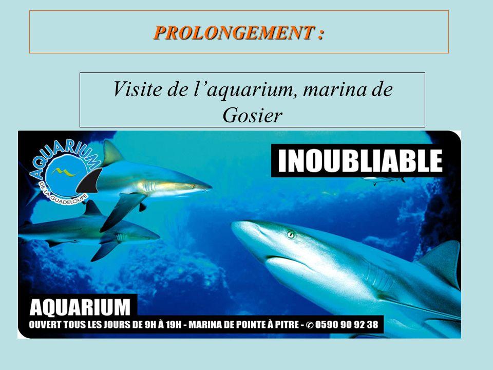 Visite de l'aquarium, marina de Gosier