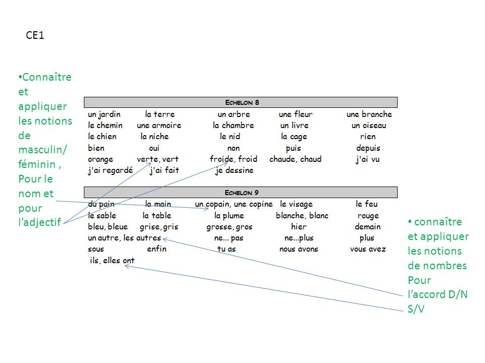 CE1 Connaître et appliquer les notions de masculin/ féminin , Pour le nom et pour l'adjectif. connaître et appliquer les notions de nombres.