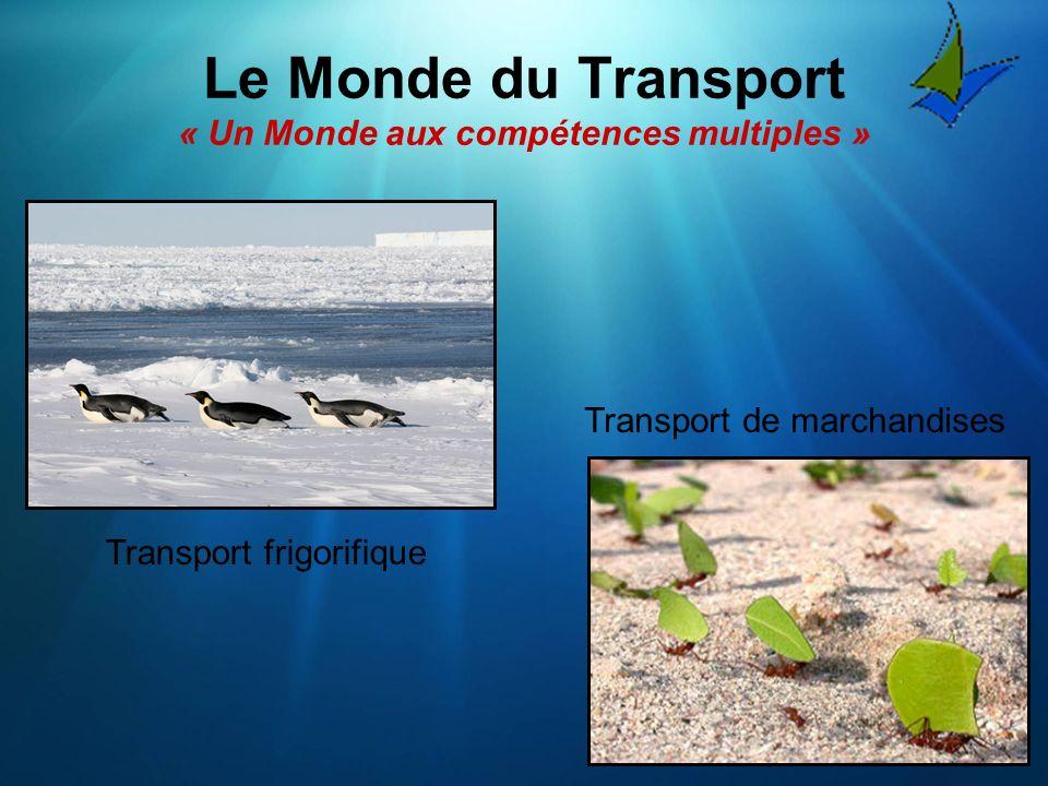 Le Monde du Transport « Un Monde aux compétences multiples »