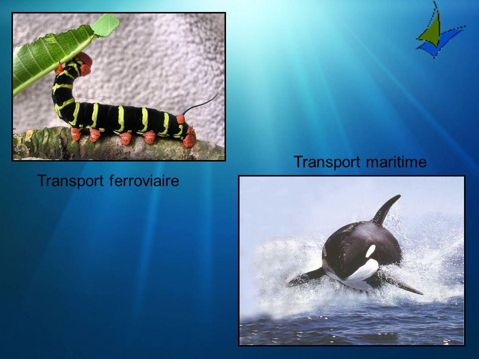 Transport maritime Transport ferroviaire