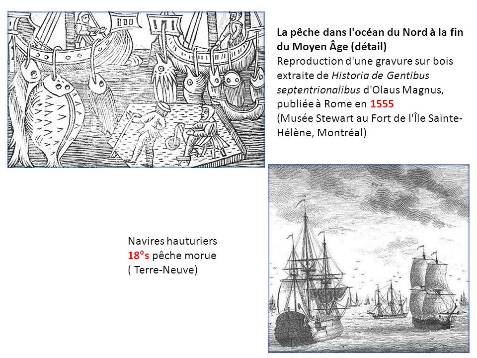 La pêche dans l océan du Nord à la fin du Moyen Âge (détail) Reproduction d une gravure sur bois extraite de Historia de Gentibus septentrionalibus d Olaus Magnus, publiée à Rome en 1555 (Musée Stewart au Fort de l Île Sainte-Hélène, Montréal)
