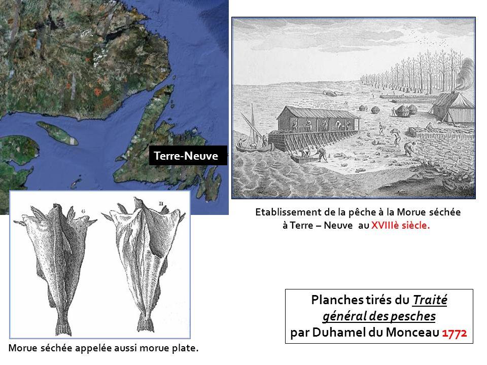 Planches tirés du Traité général des pesches