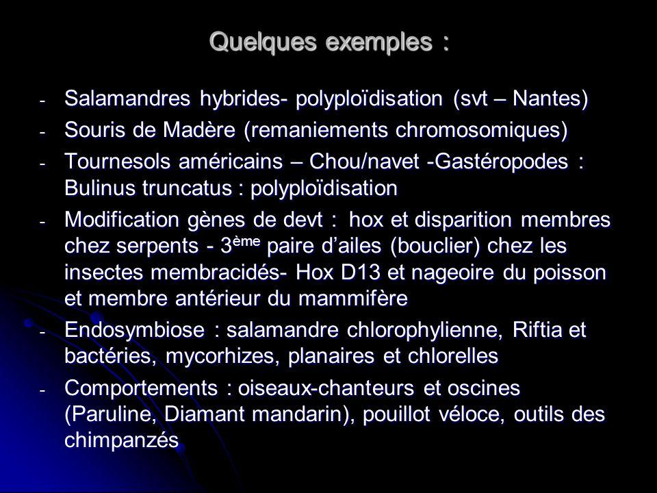 Quelques exemples : Salamandres hybrides- polyploïdisation (svt – Nantes) Souris de Madère (remaniements chromosomiques)