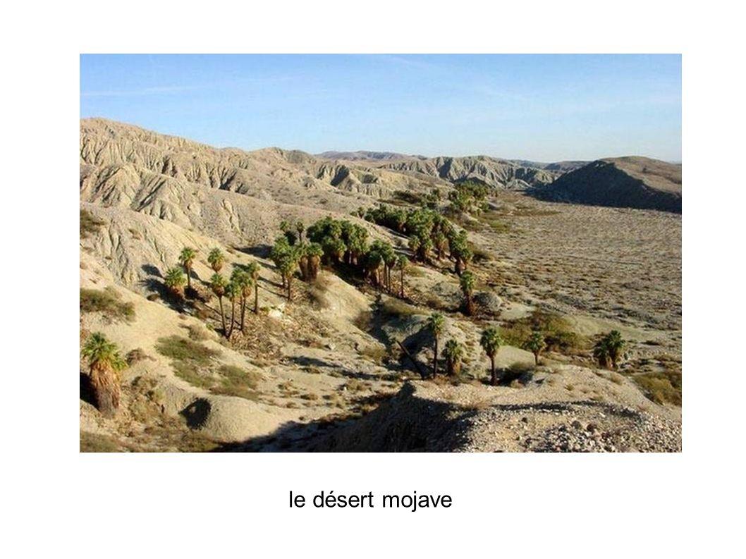 le désert mojave