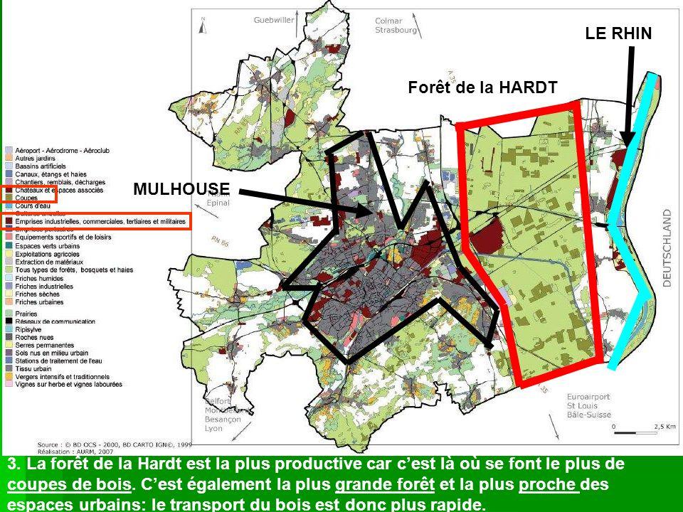 LE RHIN Forêt de la HARDT. MULHOUSE.