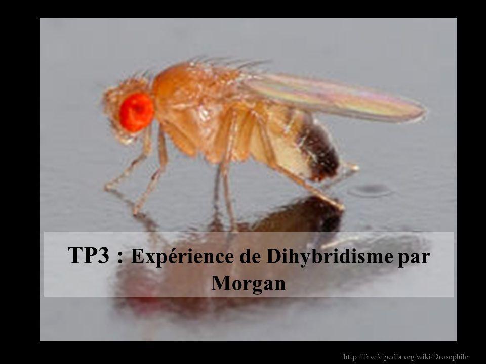 TP3 : Expérience de Dihybridisme par Morgan