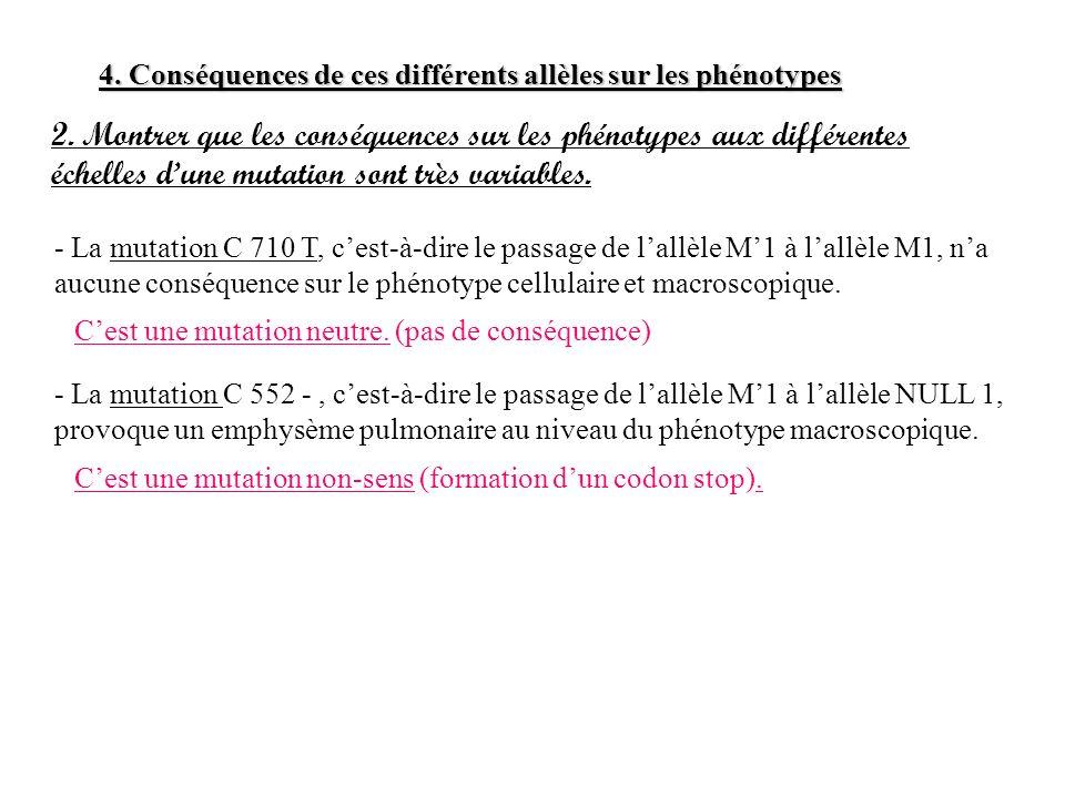 4. Conséquences de ces différents allèles sur les phénotypes