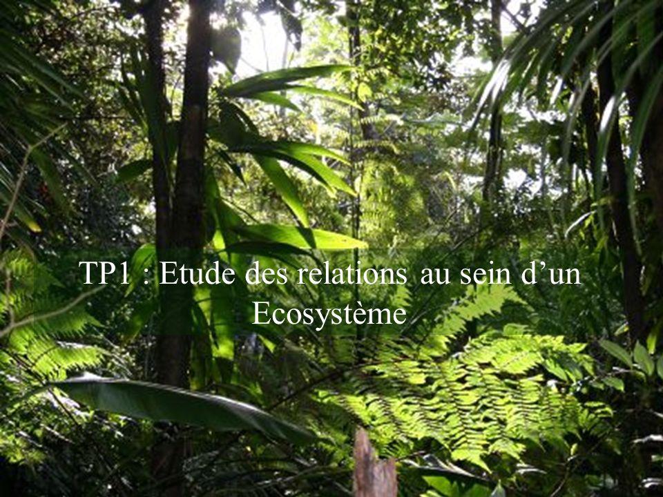 TP1 : Etude des relations au sein d'un Ecosystème