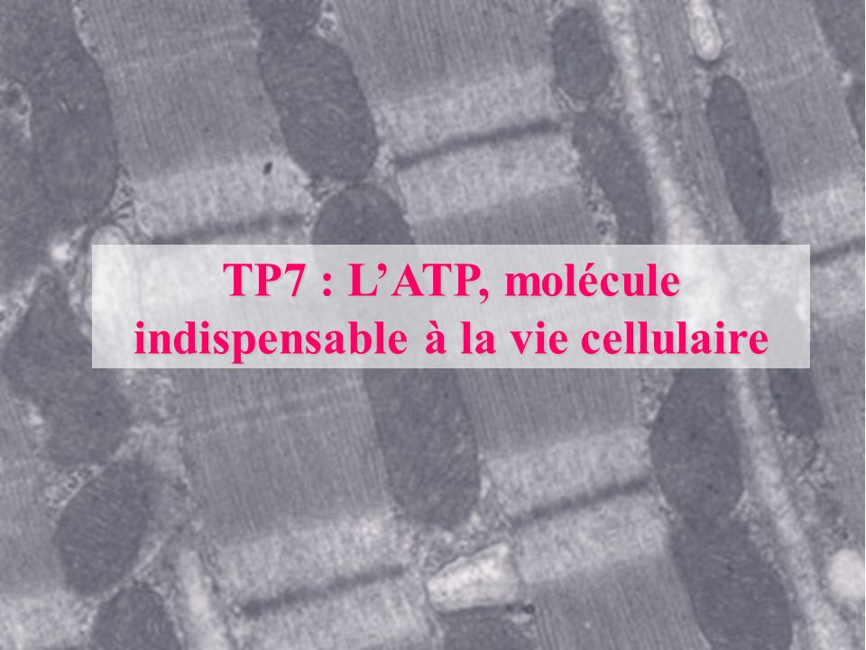 TP7 : L'ATP, molécule indispensable à la vie cellulaire