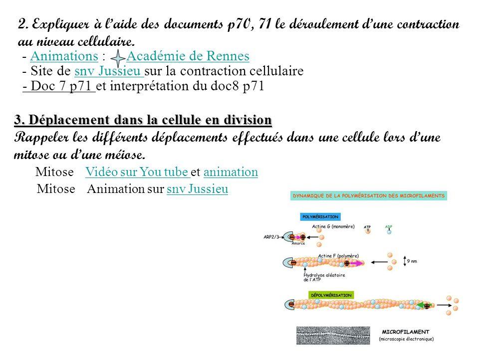 - Site de snv Jussieu sur la contraction cellulaire