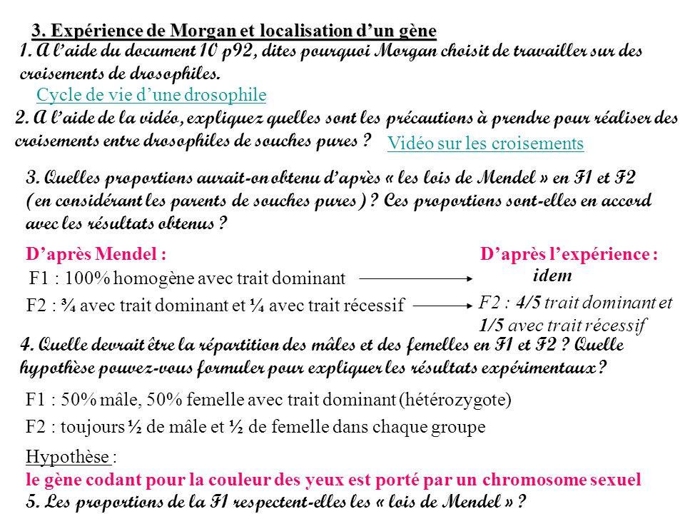 3. Expérience de Morgan et localisation d'un gène