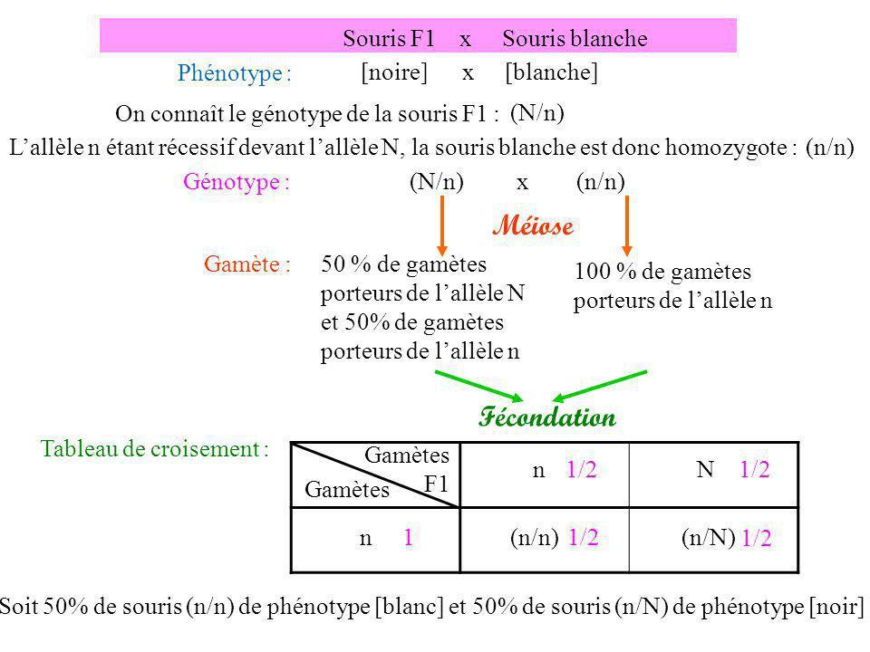 Méiose Fécondation Souris F1 x Souris blanche Phénotype :