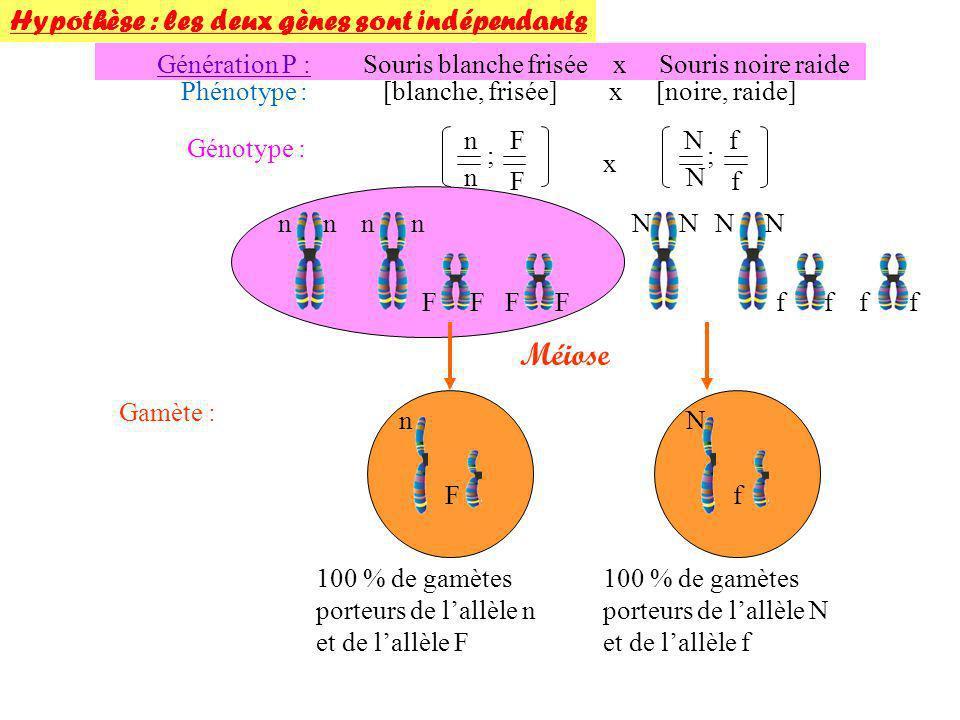 Méiose Hypothèse : les deux gènes sont indépendants Génération P :