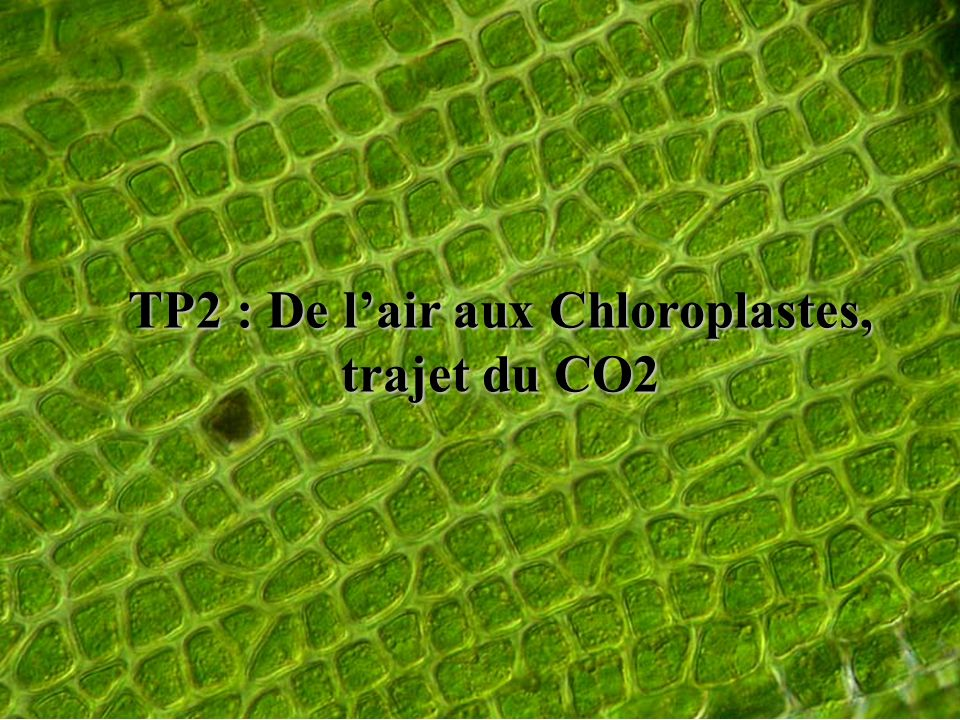 TP2 : De l'air aux Chloroplastes,