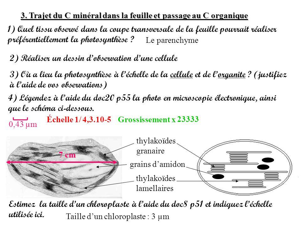 2) Réaliser un dessin d'observation d'une cellule