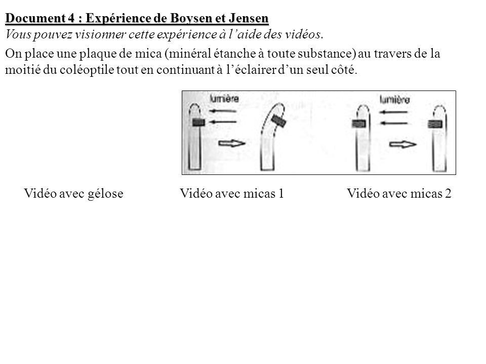 Document 4 : Expérience de Boysen et Jensen