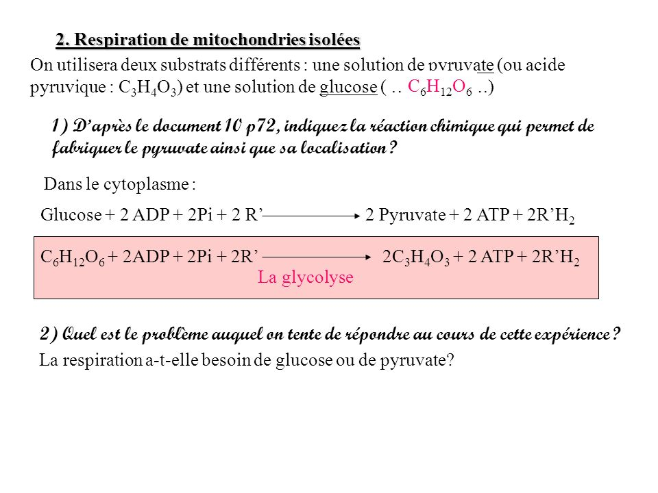 2. Respiration de mitochondries isolées