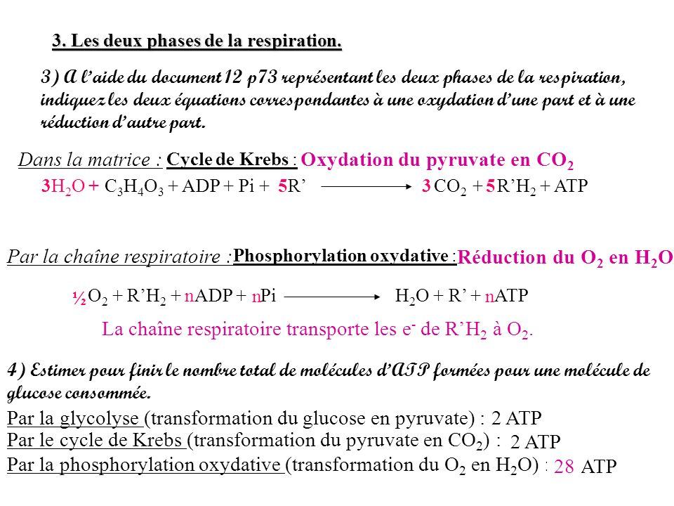 Oxydation du pyruvate en CO2