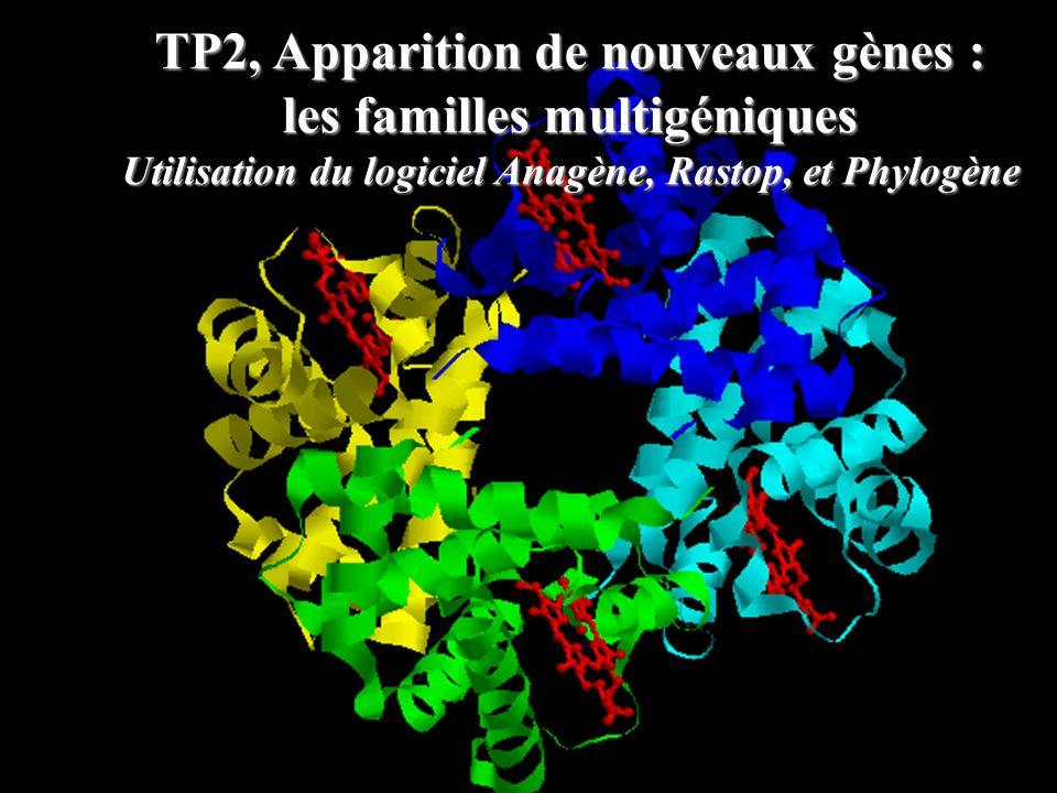 TP2, Apparition de nouveaux gènes : les familles multigéniques