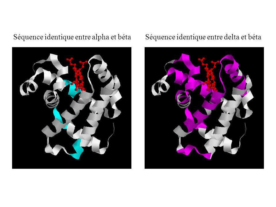Séquence identique entre alpha et béta