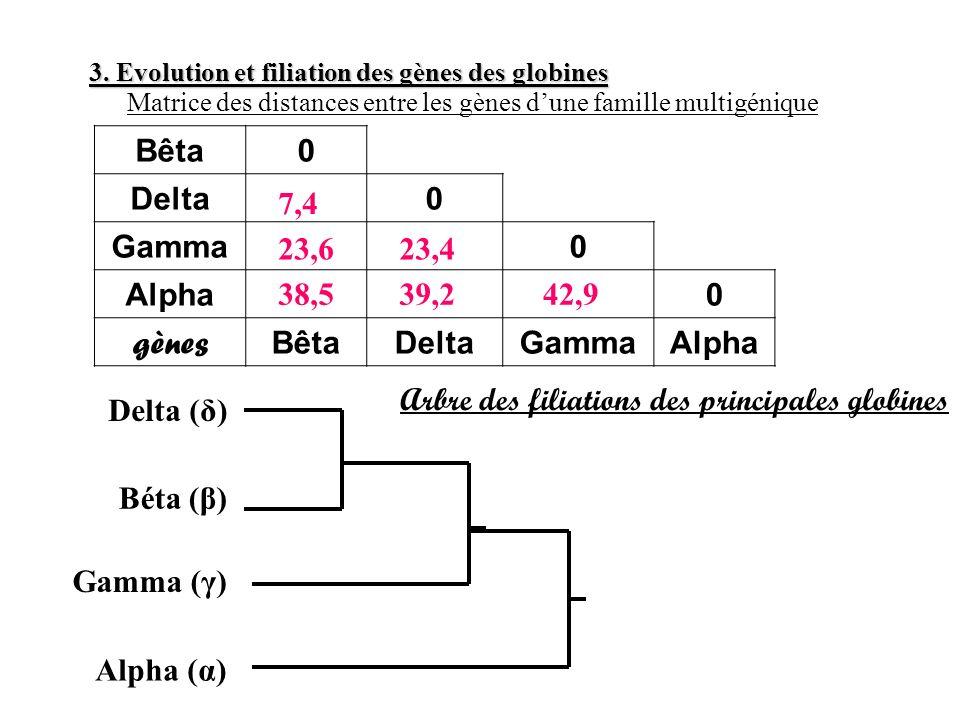 Arbre des filiations des principales globines Delta (δ)