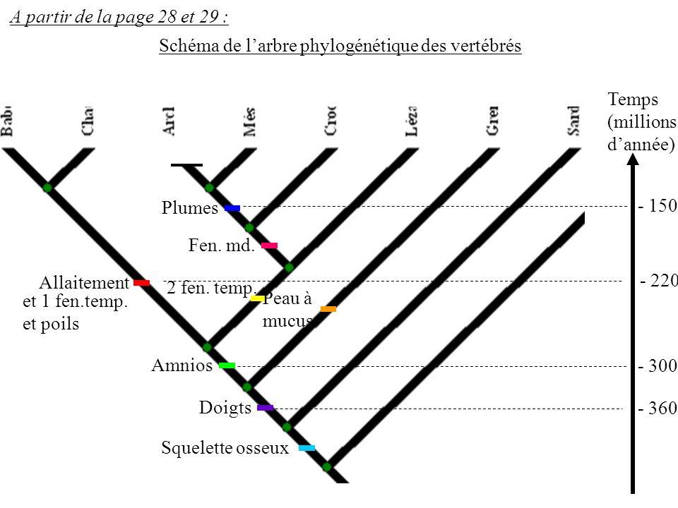 A partir de la page 28 et 29 : Schéma de l'arbre phylogénétique des vertébrés. Temps. (millions d'année)
