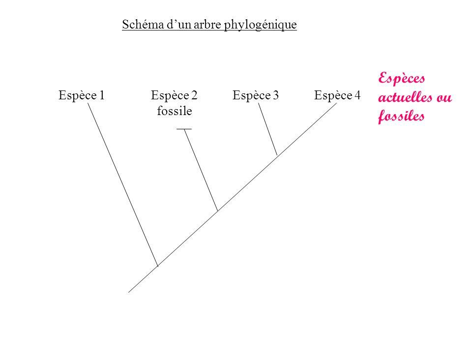 Espèces actuelles ou fossiles