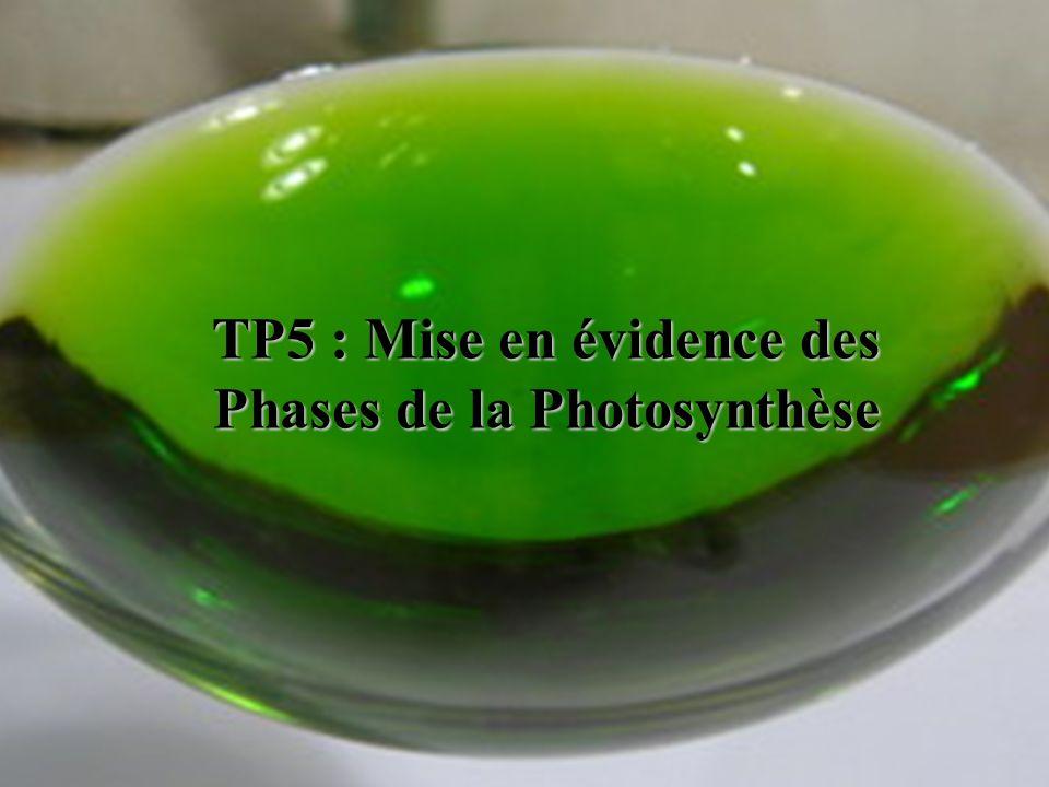 TP5 : Mise en évidence des Phases de la Photosynthèse