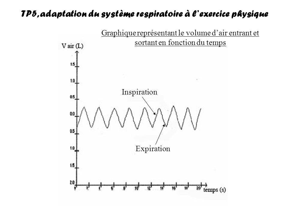 TP5, adaptation du système respiratoire à l'exercice physique