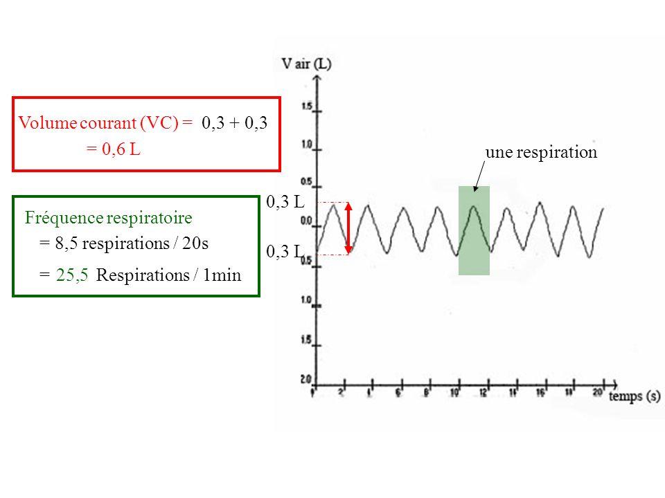 Volume courant (VC) = 0,3 + 0,3. = 0,6 L. une respiration. 0,3 L. Fréquence respiratoire. = 8,5 respirations / 20s.