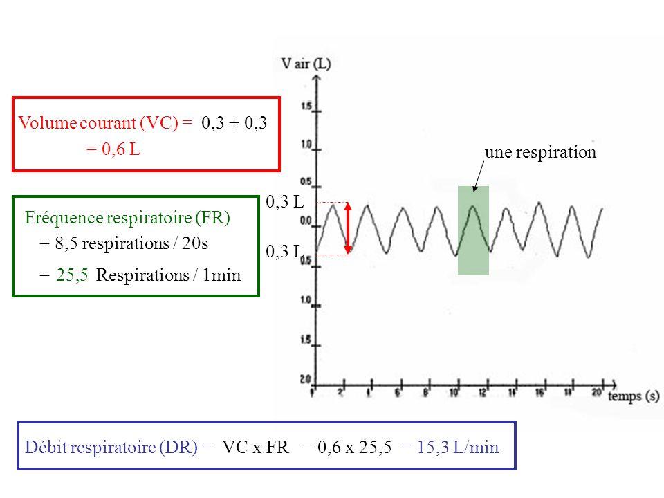 Volume courant (VC) = 0,3 + 0,3. = 0,6 L. une respiration. 0,3 L. Fréquence respiratoire (FR) = 8,5 respirations / 20s.