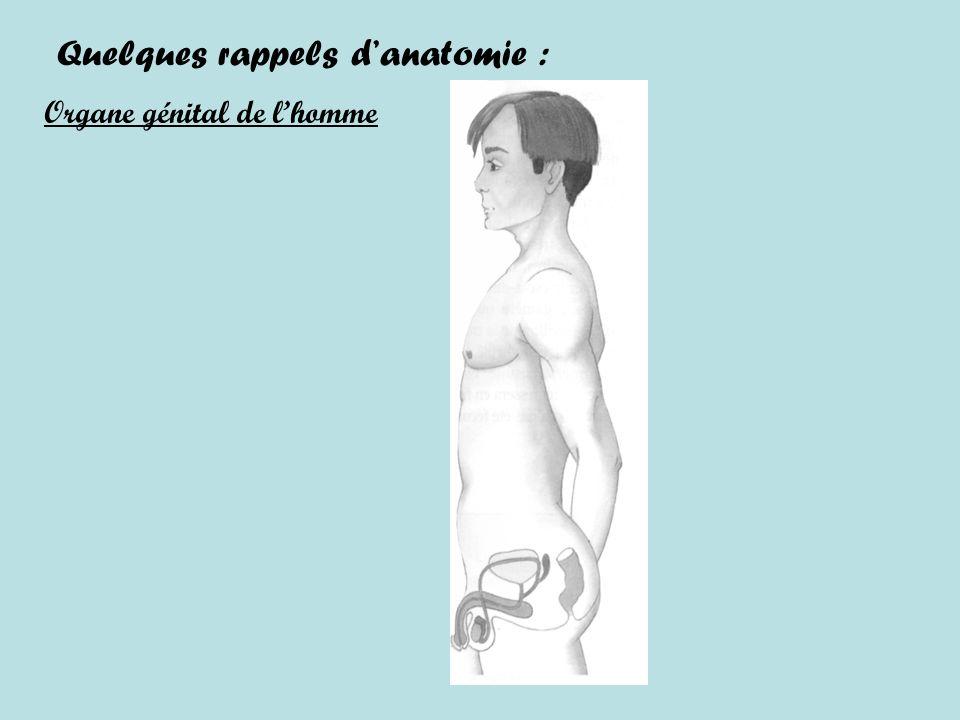 Quelques rappels d'anatomie :