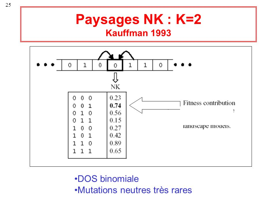 Paysages NK : K=2 Kauffman 1993 DOS binomiale