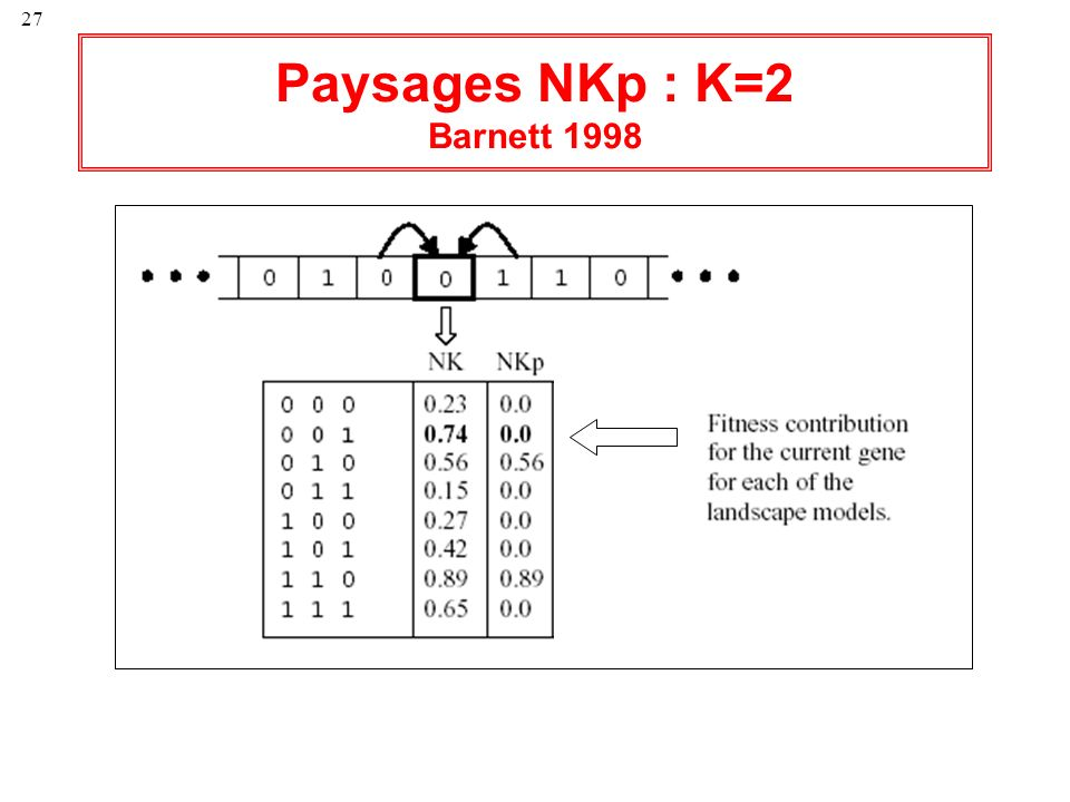 Paysages NKp : K=2 Barnett 1998