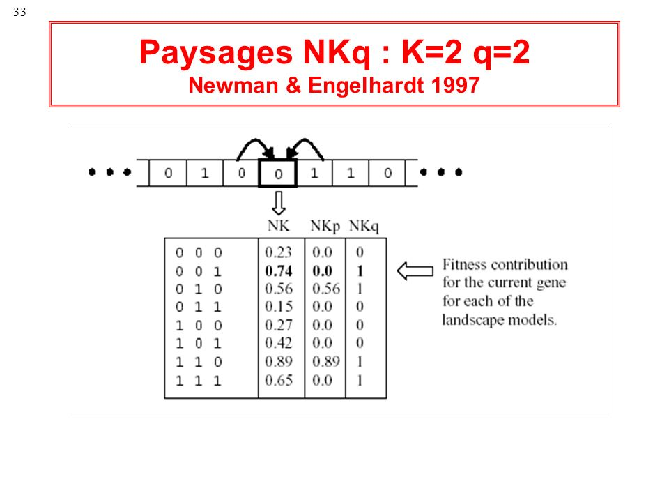 Paysages NKq : K=2 q=2 Newman & Engelhardt 1997