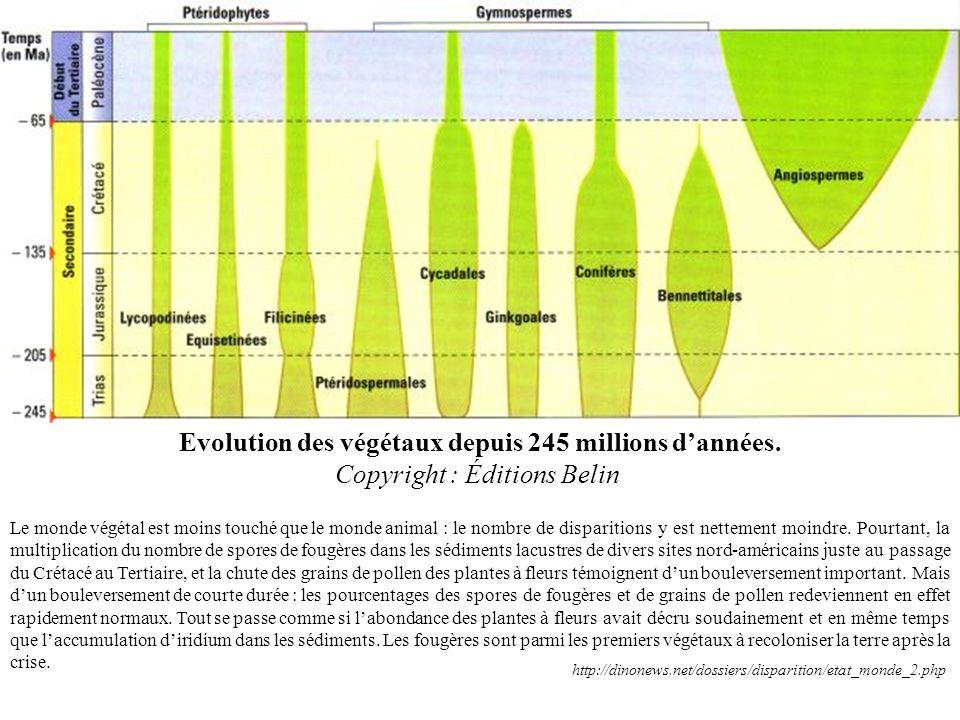 Evolution des végétaux depuis 245 millions d'années