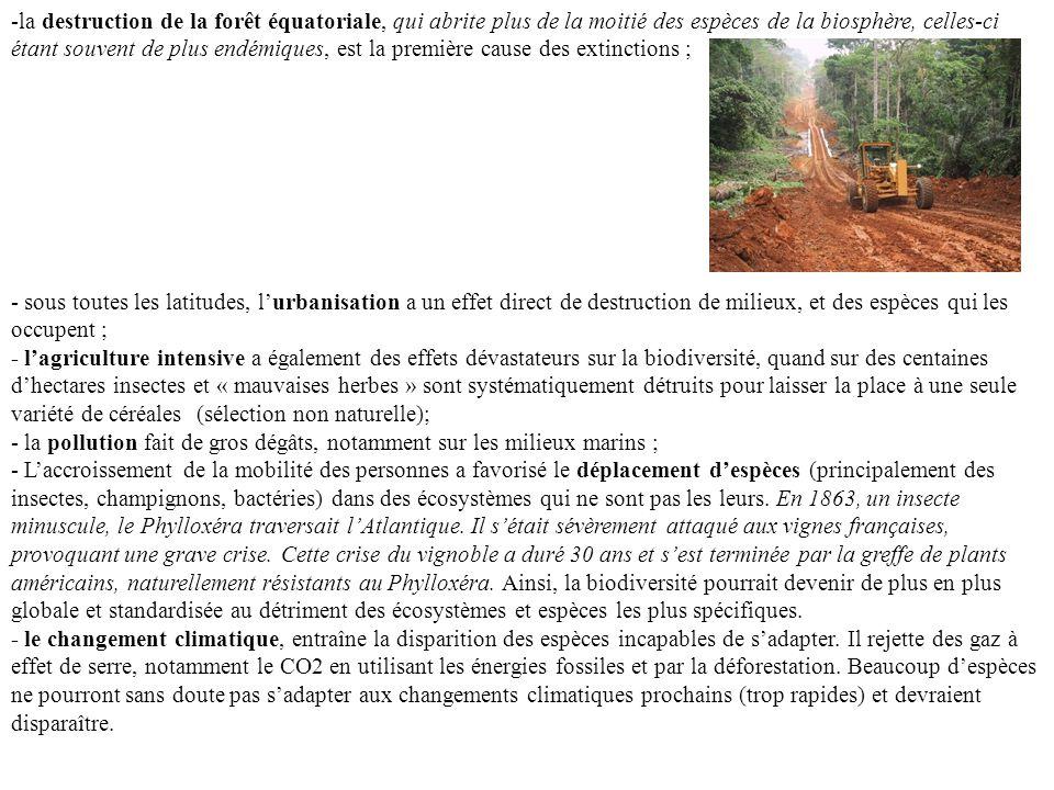 la destruction de la forêt équatoriale, qui abrite plus de la moitié des espèces de la biosphère, celles-ci étant souvent de plus endémiques, est la première cause des extinctions ;