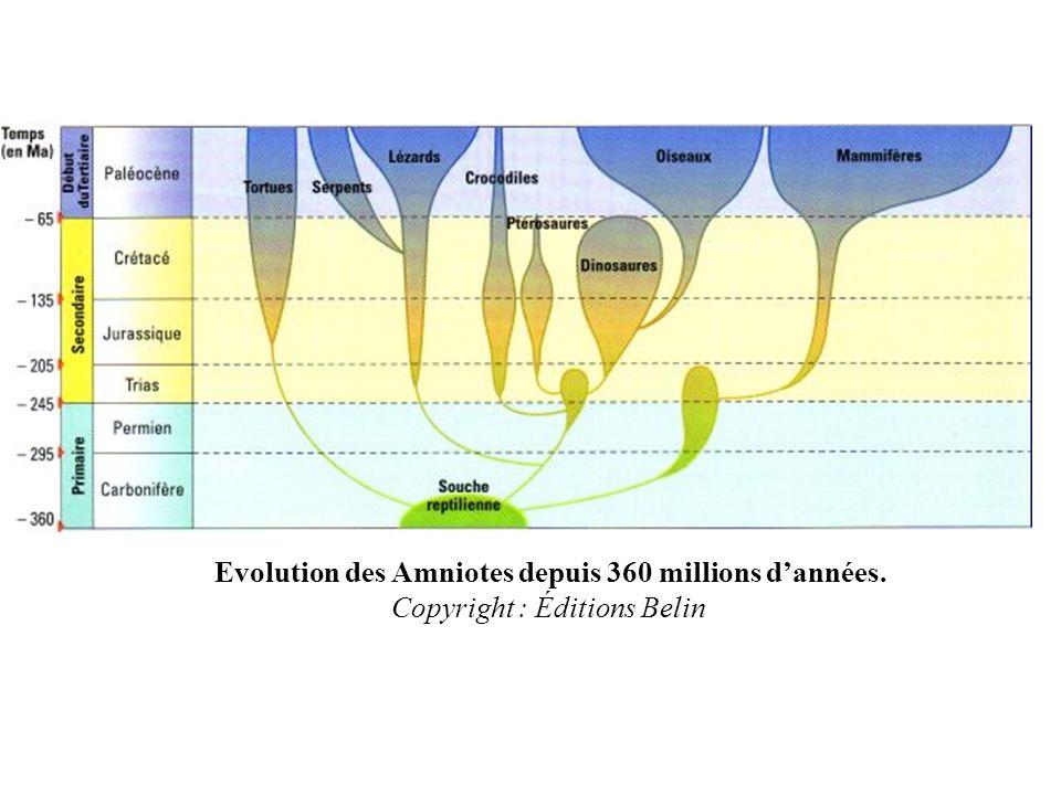 Evolution des Amniotes depuis 360 millions d'années
