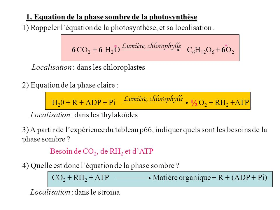 ½ 1. Equation de la phase sombre de la photosynthèse