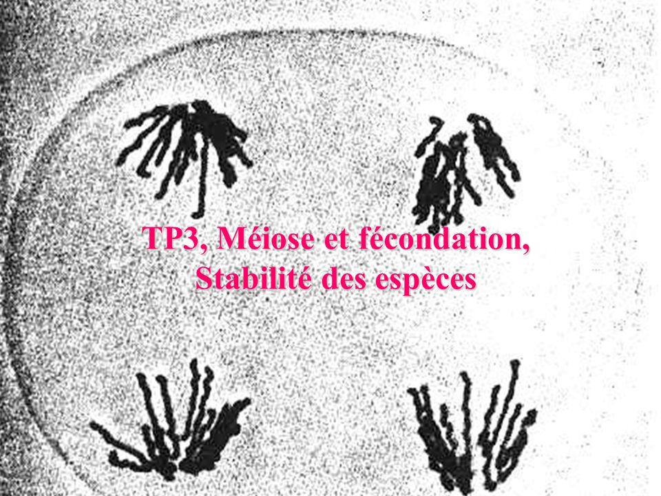 TP3, Méiose et fécondation,